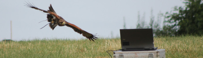 hawk and laptop