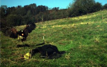 hawk image capture